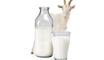 Как правильно поить ребенка козьим молоком?