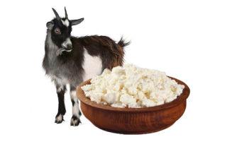 Как приготовить творог и кефир из козьего молока для грудного ребенка?