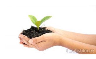 Экологическое воспитание детей — практика!