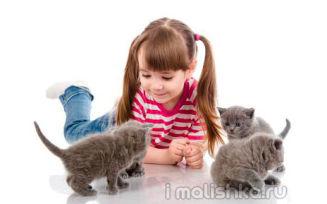 Домашние животные для детей: как выбрать?
