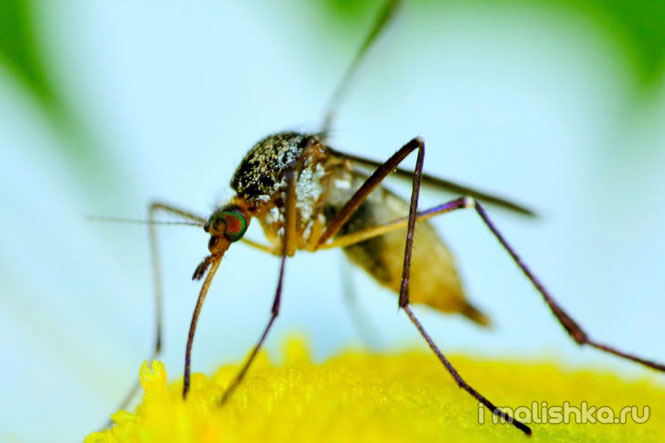 Как защитить от комаров самых маленьких?