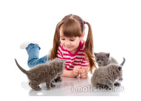 Домашние животные дома