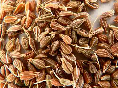 chereda-ot-sipi-i-allergii-anis