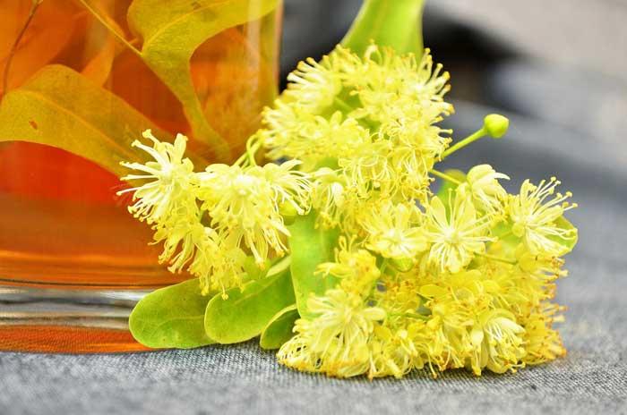 chay-dlya-rebenka-1-god-lipoviy-cvet