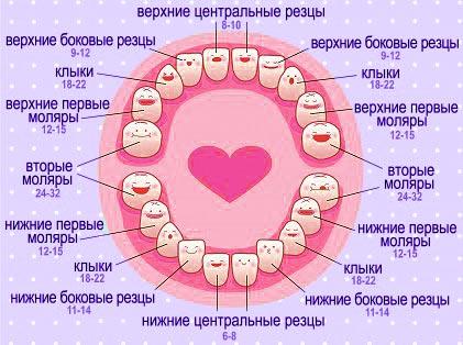 pervye-zuby-u-rebenka-1