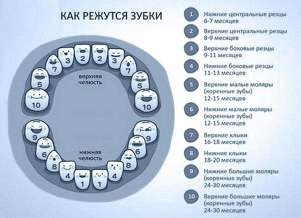 porjadok-prorezyvanija-molochnykh-zubov-2