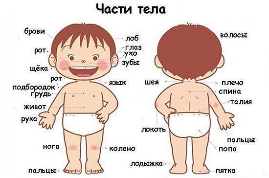 rezhim-rebenka-v-1-god-i-2-mesyaca-13