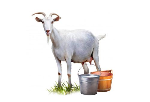 kogda-mozhno-davat-rebenku-koze-moloko-mini
