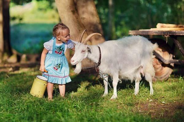 mozhno-li-davat-koze-moloko-novorozhdennomu-3